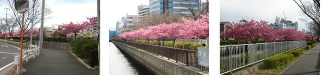 Sakura321a