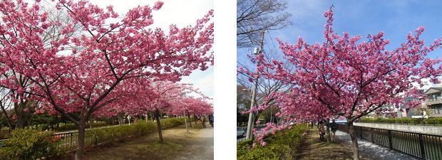 Sakura321b